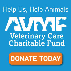 Veterinary Care Charity Fund - Donate Today