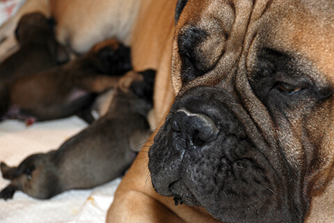 Newborn Puppies Photo